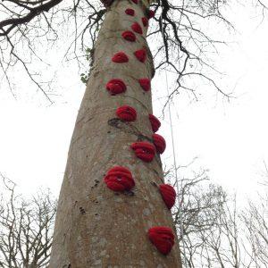 03. Climbing tree - Swansea