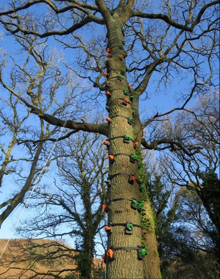 Tree climb 2, Jersey Youth