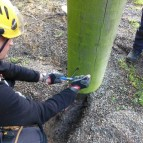 Wood pole testing 4