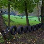 non invasive course in trees